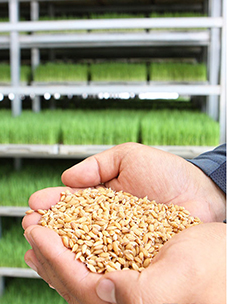 """韩国人的饭力!由CJ FreshWay和地区农户的""""大米合同种植""""来守护!"""