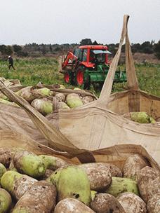 CJ Freshway,与农户的合同种植扩大到汝矣岛面积的4倍